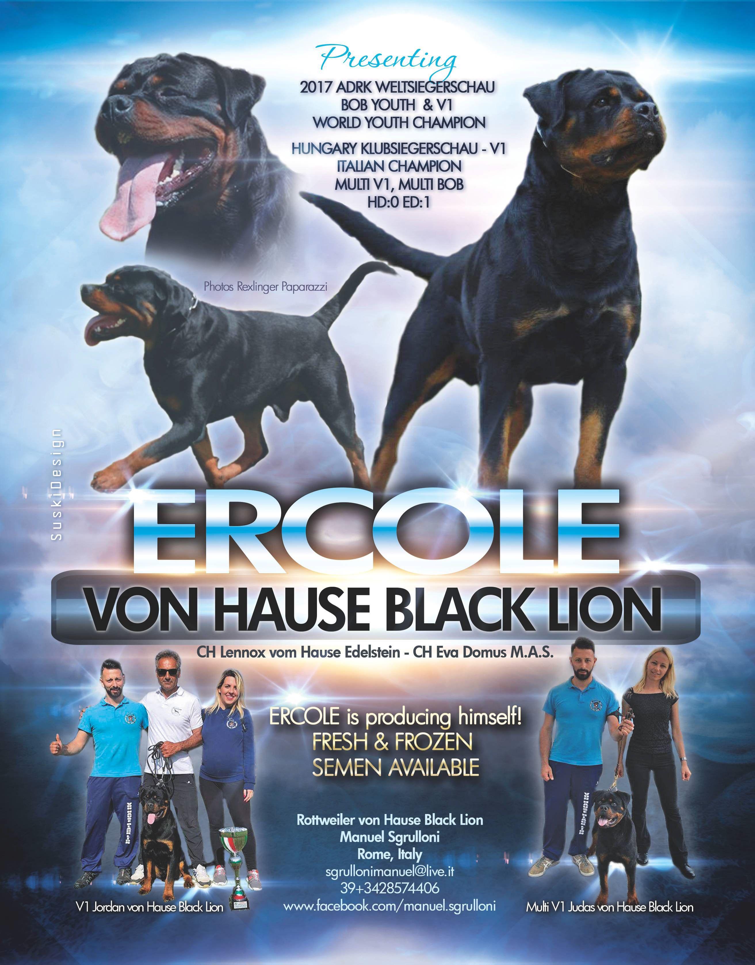 Rottweiler Von House Black Lion Manuel Sgrulloni Rome Italy