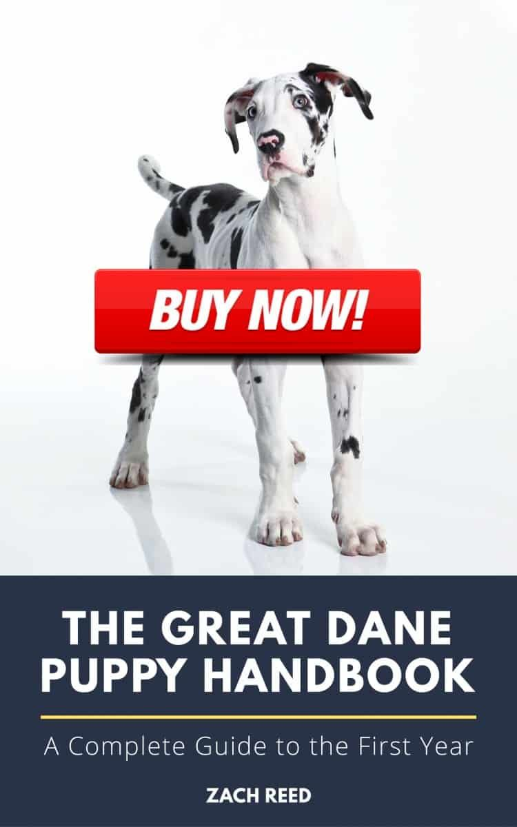 The First And Only Guide To Caring For Great Dane Puppies This