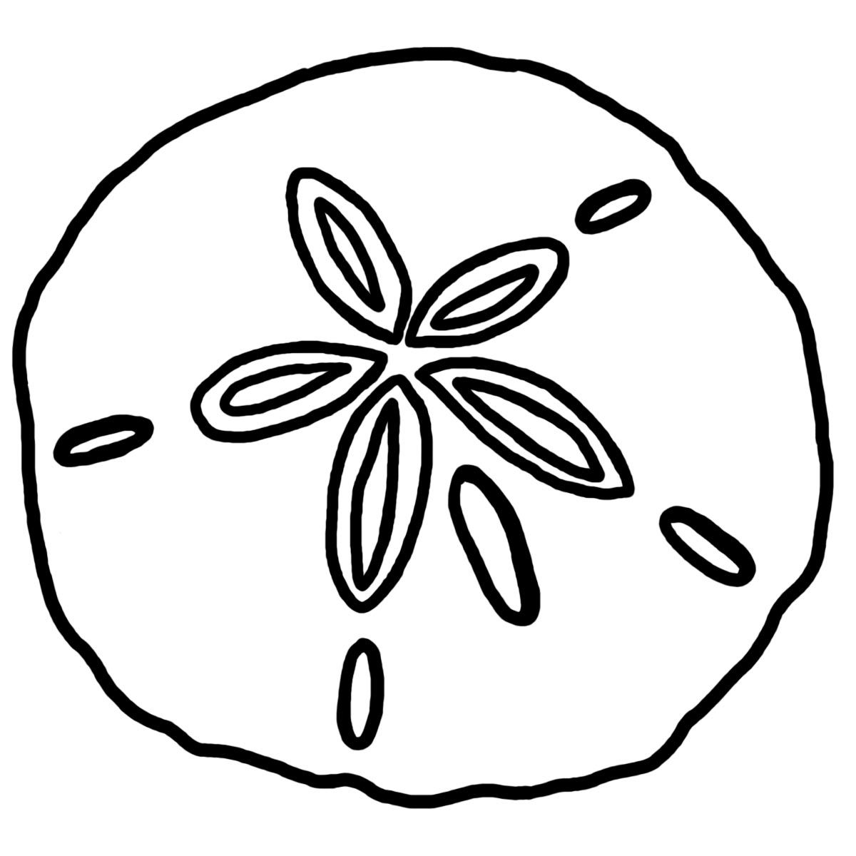 coloring pages shells and sand dollars sand dollar custom