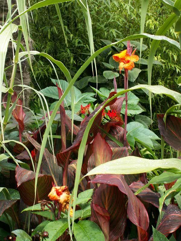 Exotic Looking Outdoor Plants Uk Home Decor Pinterest Garden