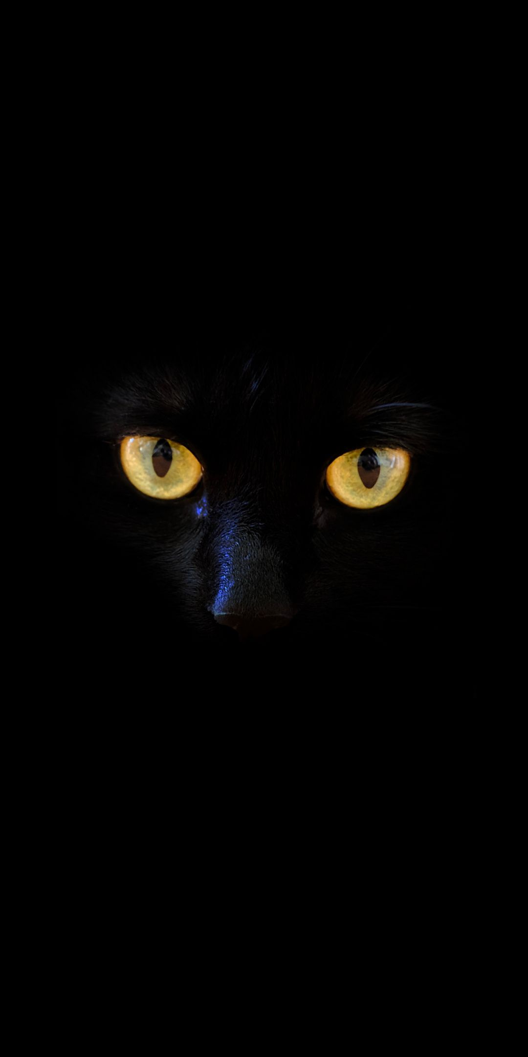 Black Cat Yellow Eyes Portrait 1080x2160 Wallpaper Cat Portraits Yellow Eyes Black Cat