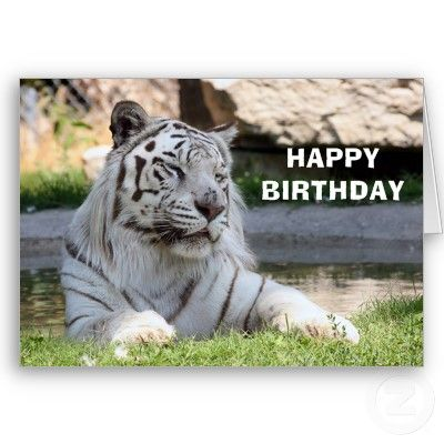 White Tiger Birthday Card From Httpzazzletigercards