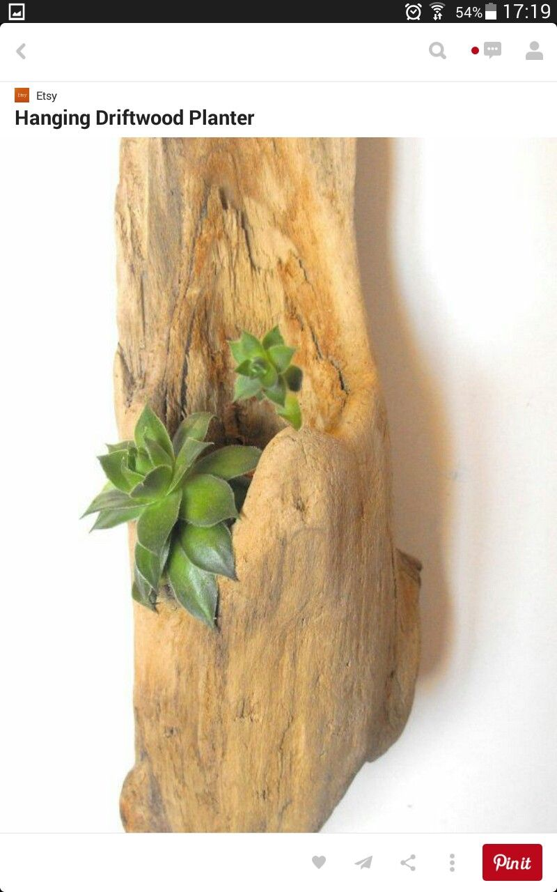 Driftwood Planters, Wooden Pots, Decoration Ideas