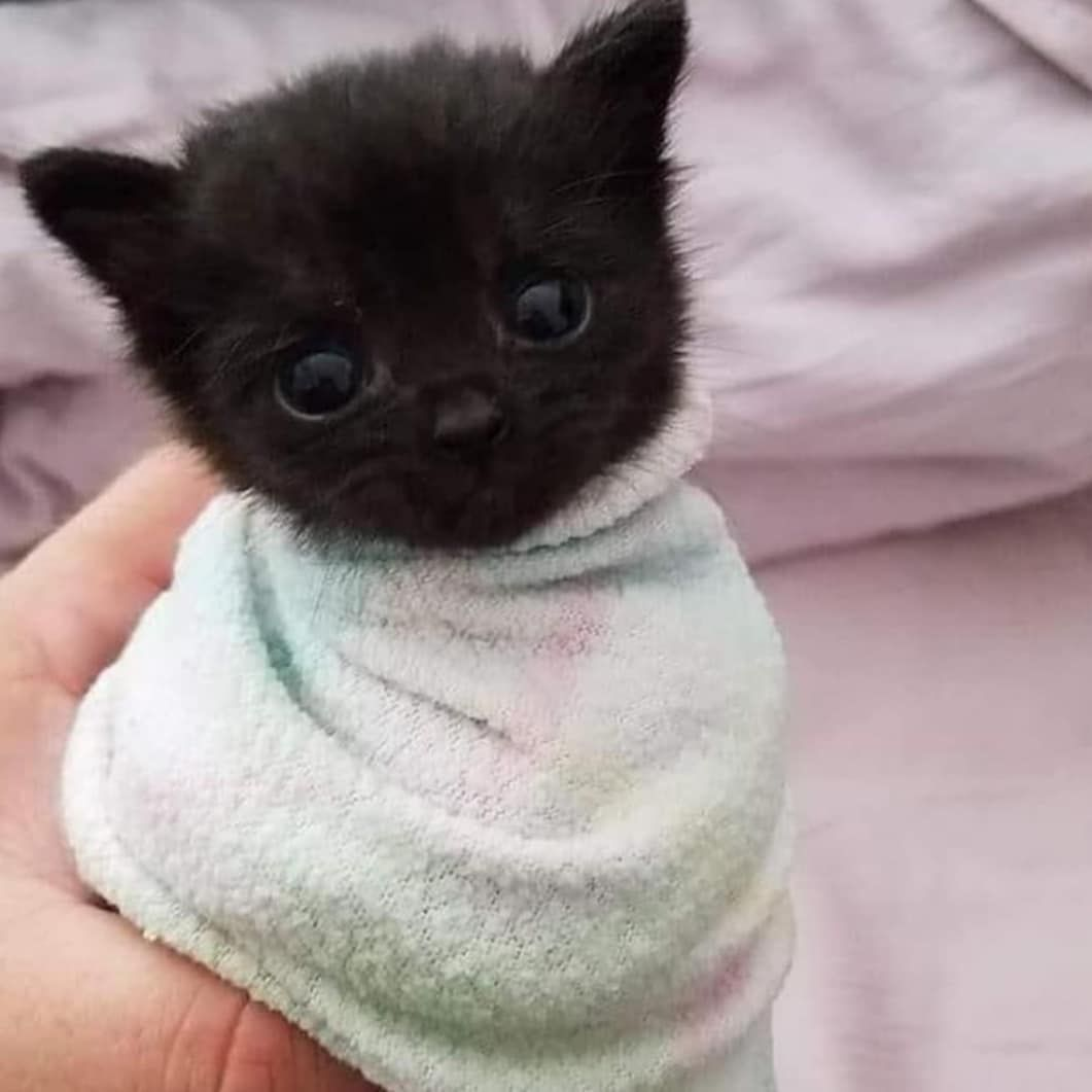 Dogs And Cats Kitty Cat Kitty Funny Cute Kitty Kitty Make Up Funny Kitties Lovely Cats Kitty Quotes Kitten Quotes In 2020 Cute Baby Animals Kittens Cutest Cute Animals