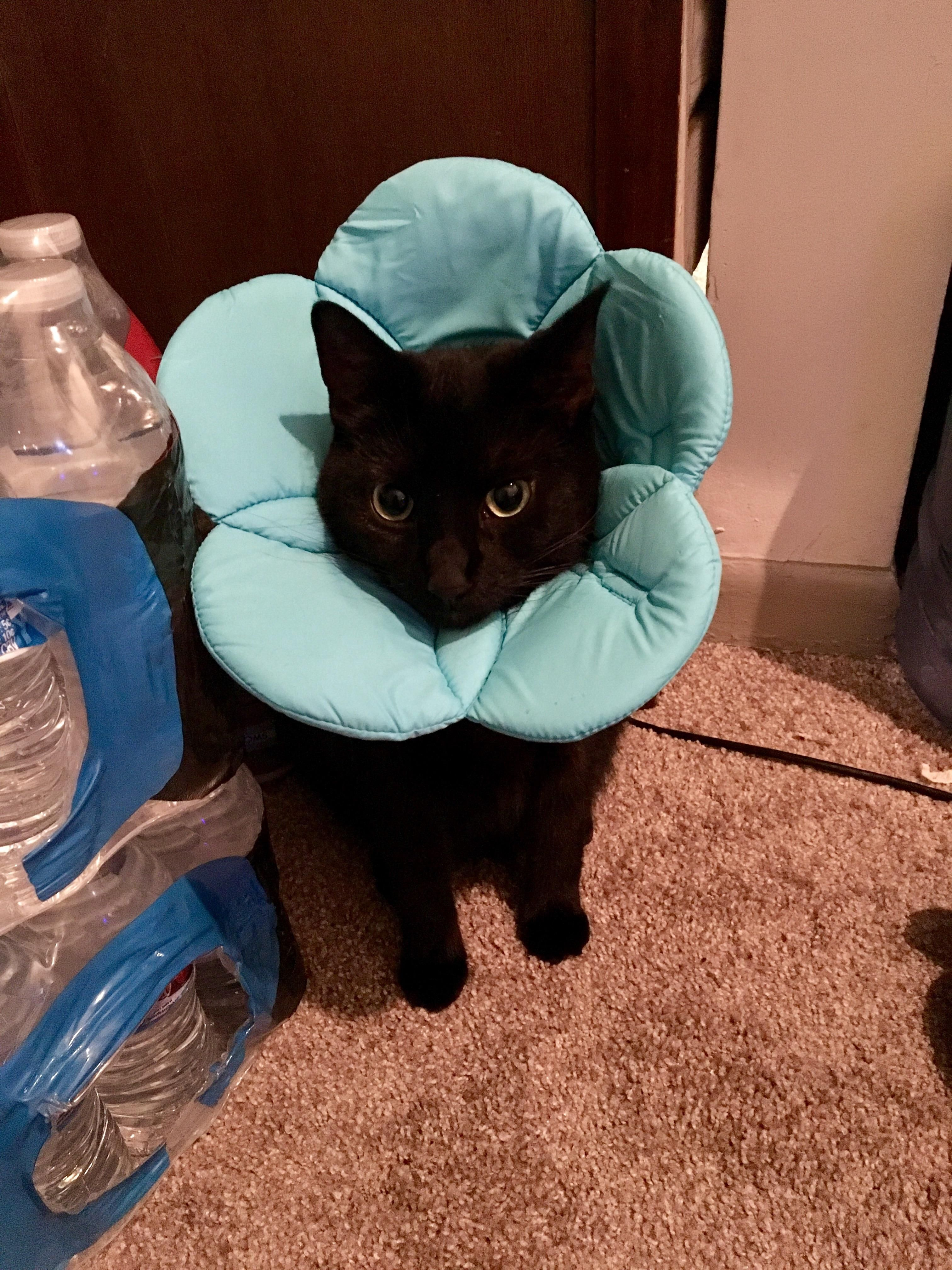 Cone Of Shame Disguised As A Flower Http Ift Tt 2rclk08 Cat Collars Cone Of Shame Cute Animals