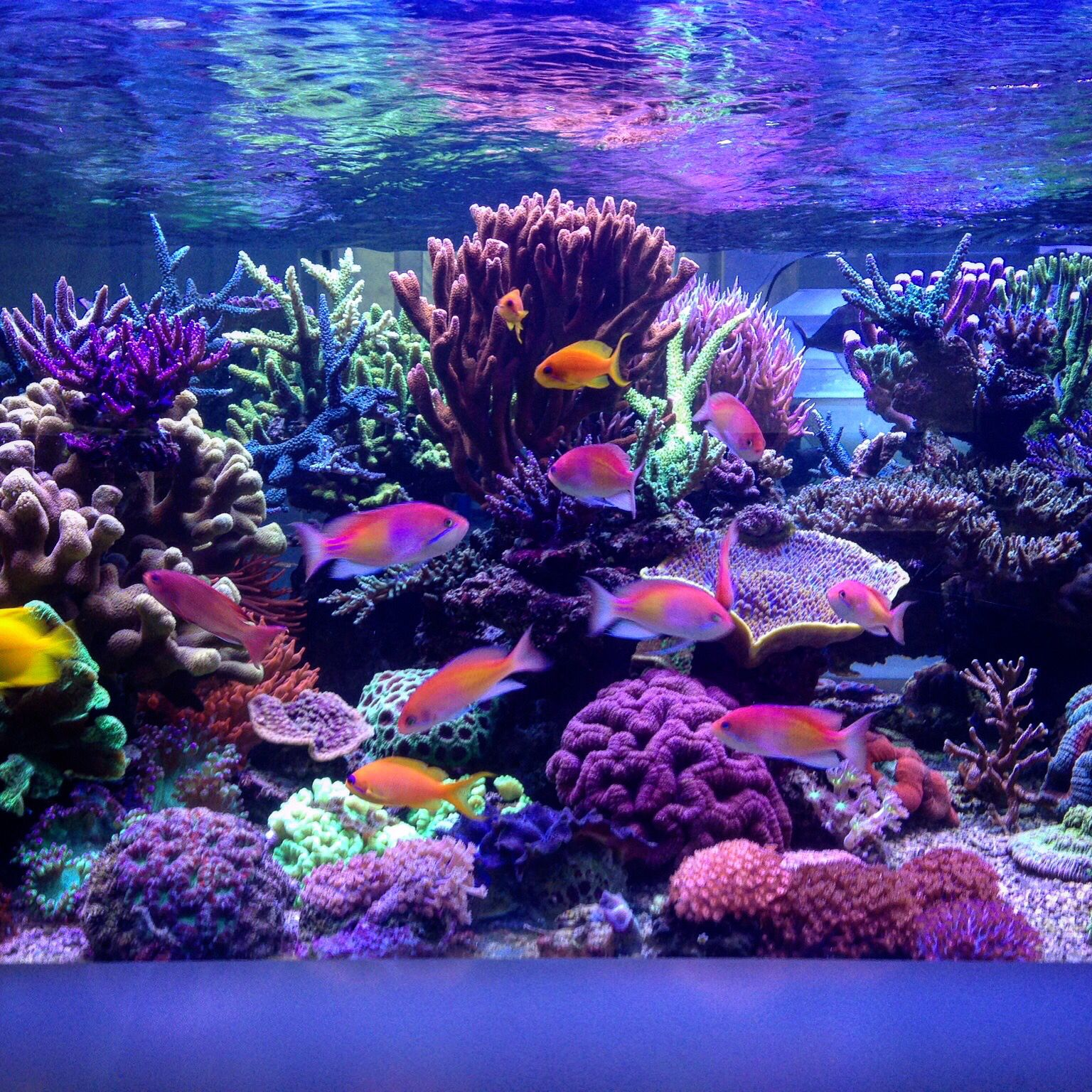 My favorite reef tank of all time Sunnyx s I hope someday mine