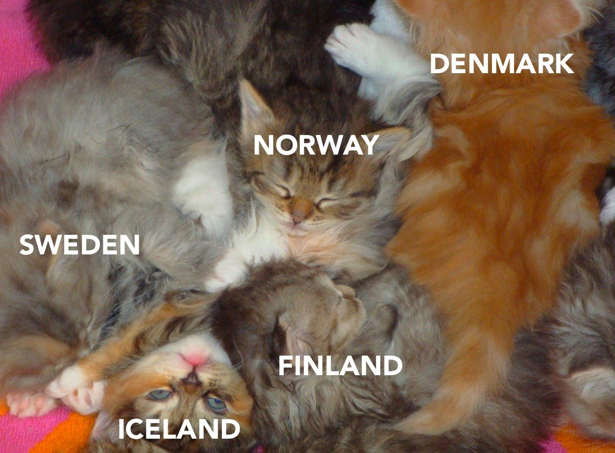 International Relations as Depicted by Cats [This whole