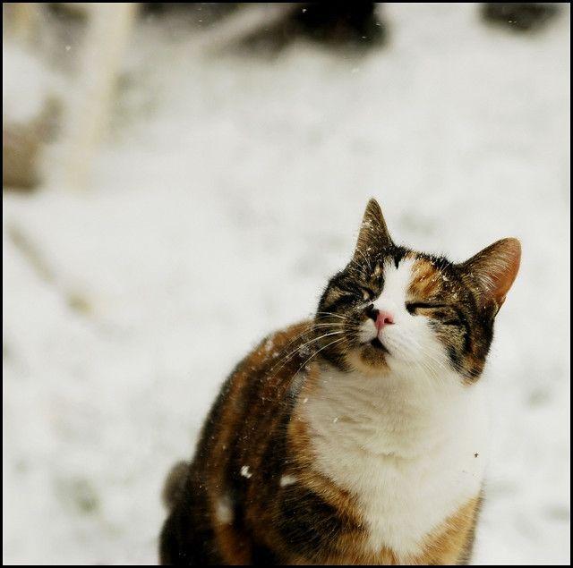 Feel snow by lynnlin