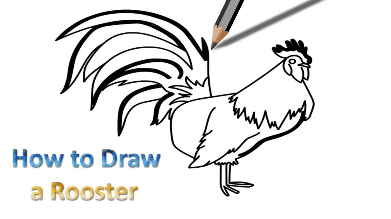 rooster drawing step by step
