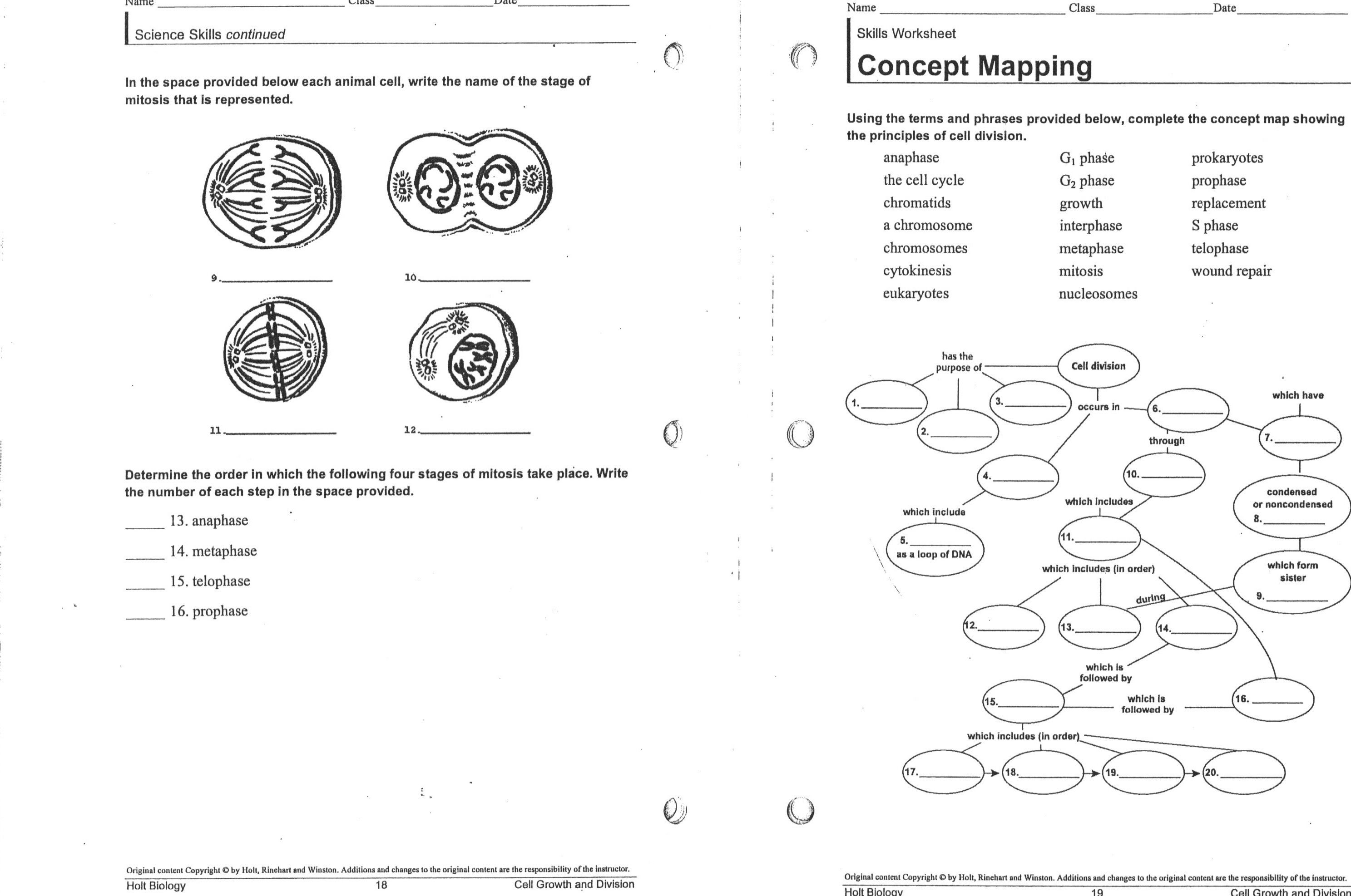 meiosis stages worksheet Bing images Mitosis, Meiosis