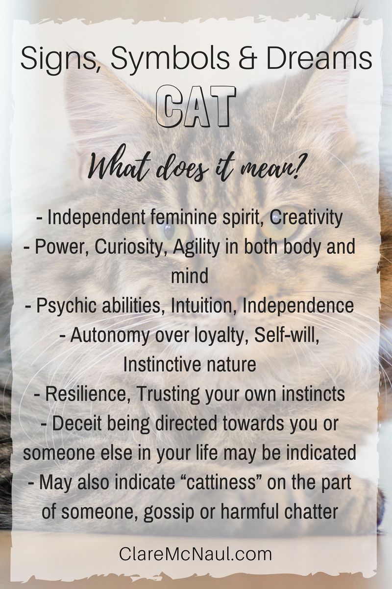 When Cat shows up in your life, dreams or readings what is