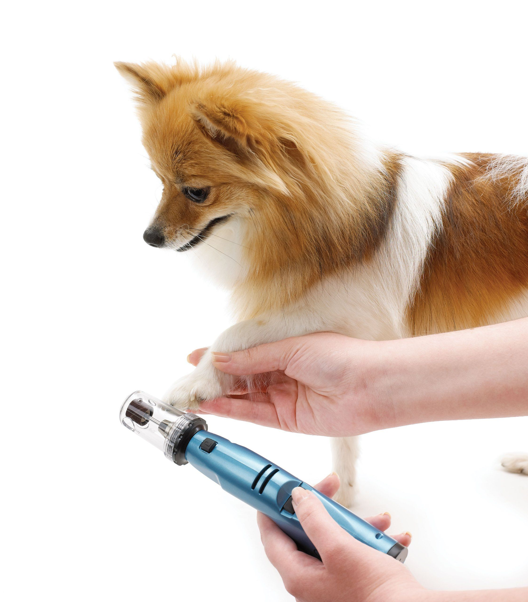 Pin On Best Dog Nail Grinders