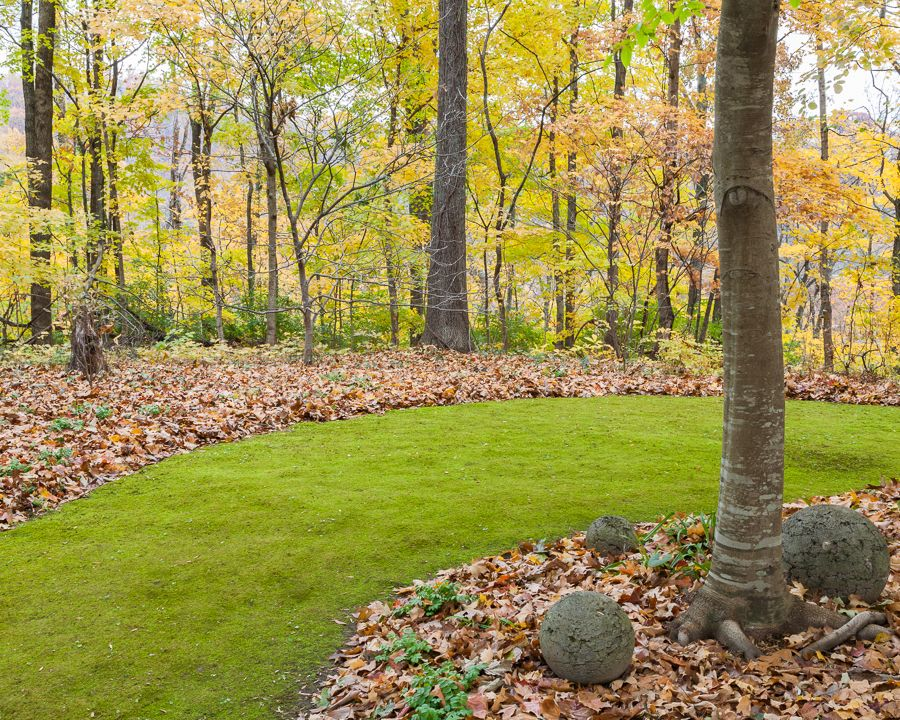 Love The Moss Path For Shade Moss Acres   Gardening With Moss And Growing  Moss