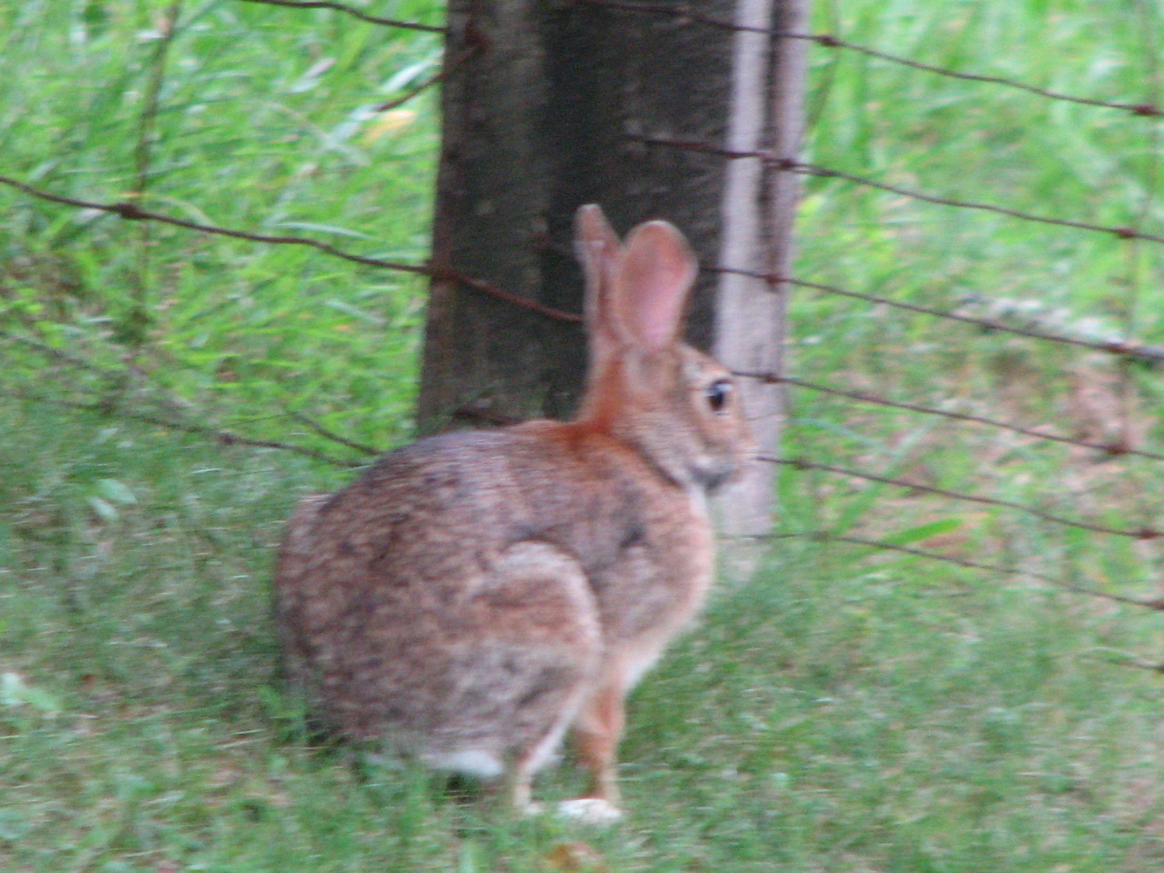 bunny...