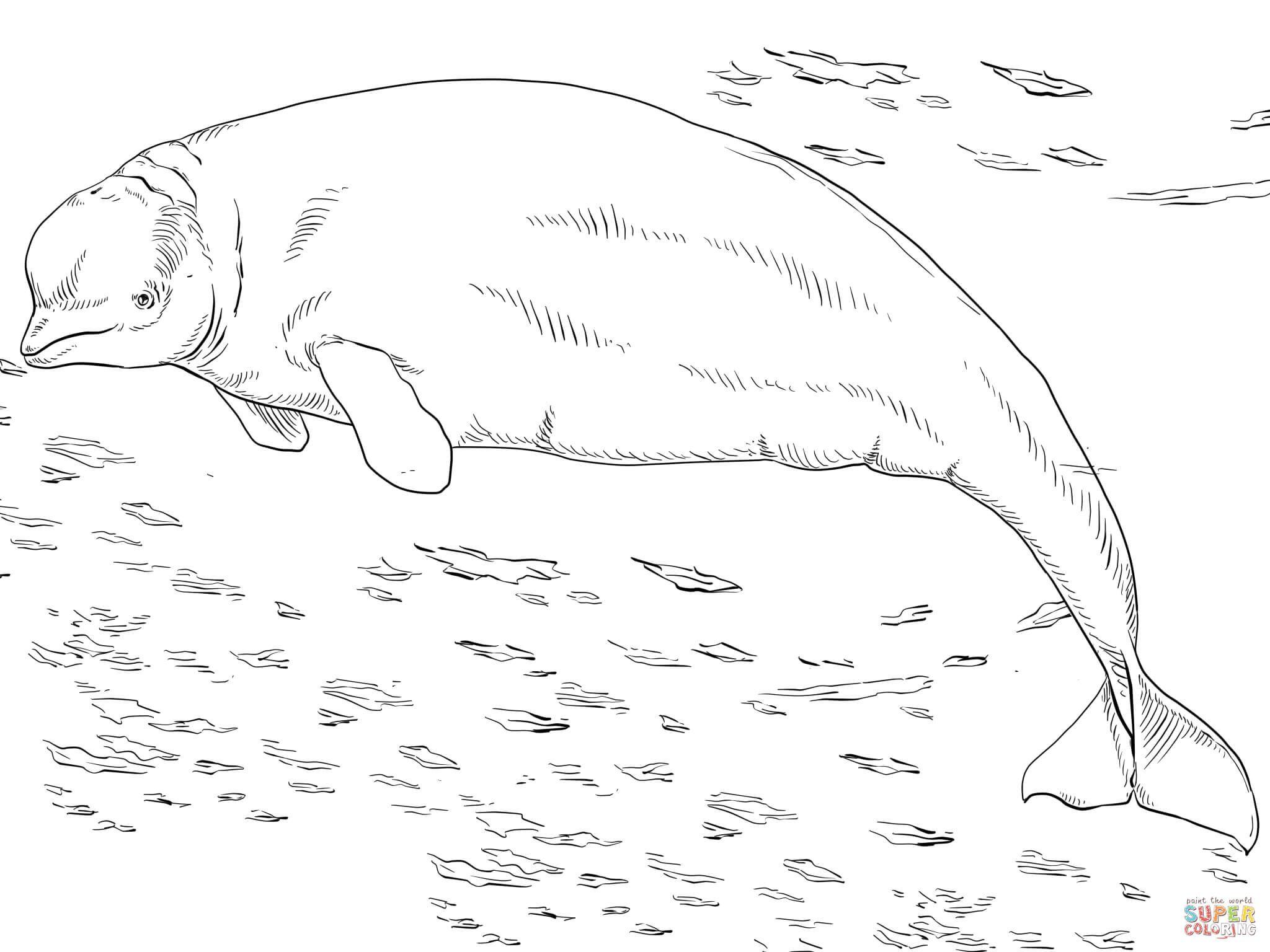 Whale Coloring Malvorlagen Tiere Kostenlose Ausmalbilder Wenn Du Mal Buch