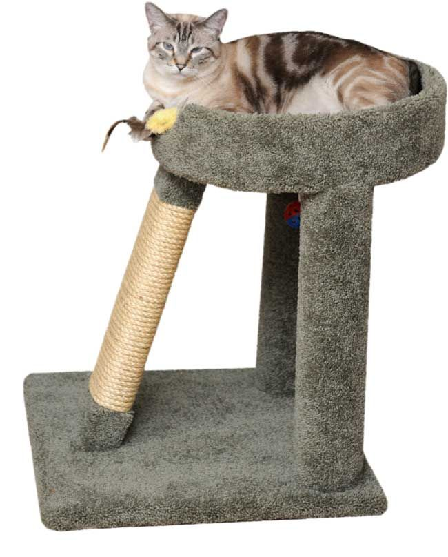 explore cat scratching post play spaces and more