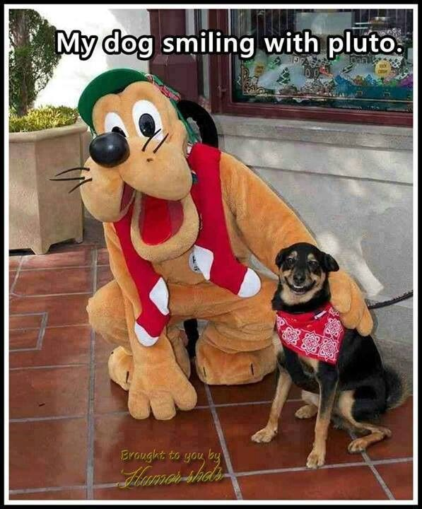 LOL the dog is smiling