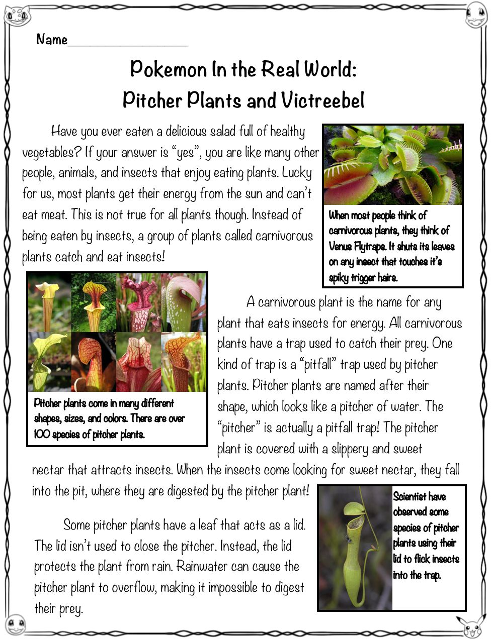 Did You Know That The Pokemon Victreebel Is Based Off Of Real World Carniverous Plants Called Pitcher Plants This High Int Close Reading Pitcher Plant Pokemon [ 1272 x 976 Pixel ]