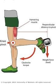 Image Result For Third Class Lever In The Body My Pe
