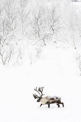 für ein weißes und hölzernes Weihnachten