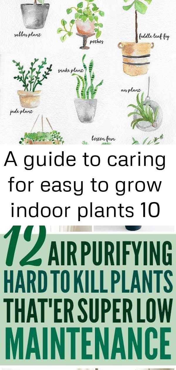 A guide to caring for easy to grow indoor plants 10