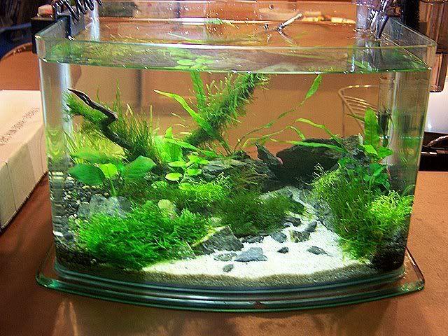 Picotope Shrimp Tank Aquascaping Aquatic Plant Central Shrimp Tank Nano Aquarium Aquascape
