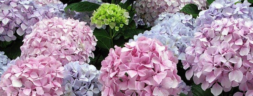 Decora tu boda con flores como las hortensias.