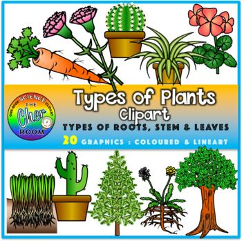Plants Clipart Types Of Roots Stem And Leaves Plants Plant