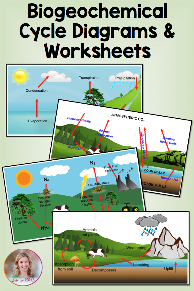Biogeochemical Cycles Worksheets | Environmental systems | Pinterest ...