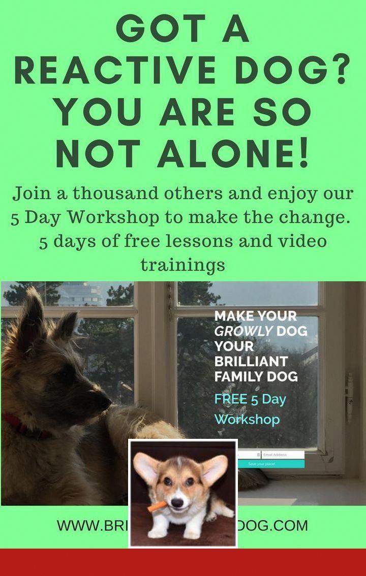 Dog Behavior Not Eating Dogtraining And Dogobedience Good Dog