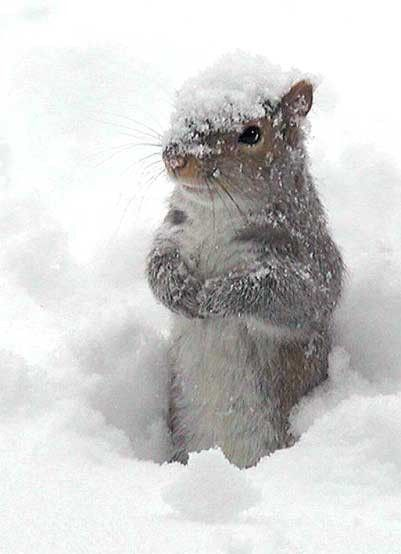 snowy squirrel | a quieter storm