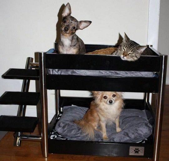 camas para mascotas literas