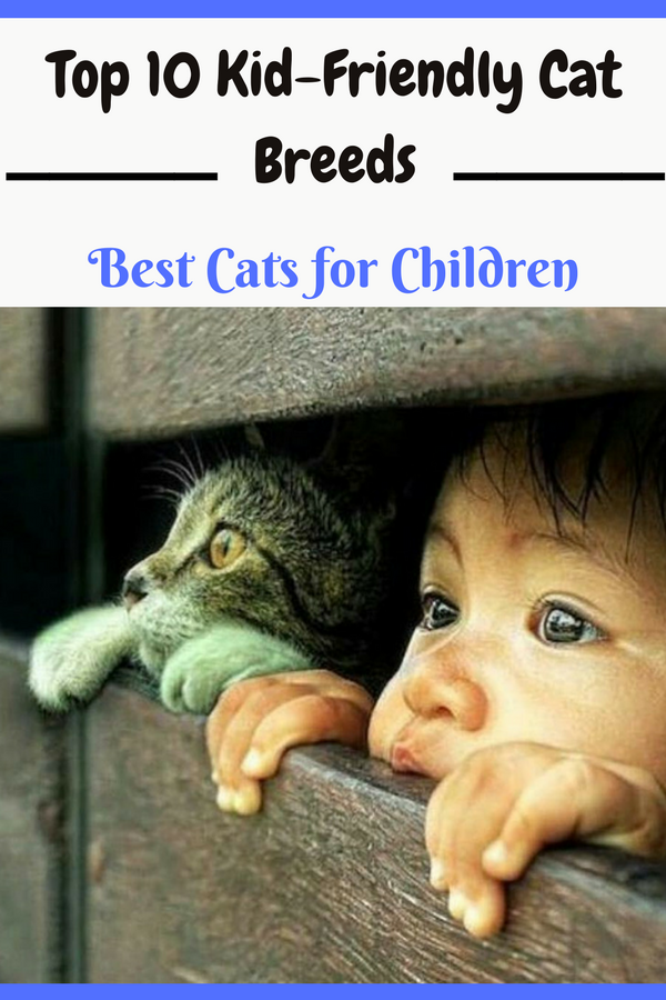 Top 10 Kid Friendly Cat Breeds Best Cats For Children Cat