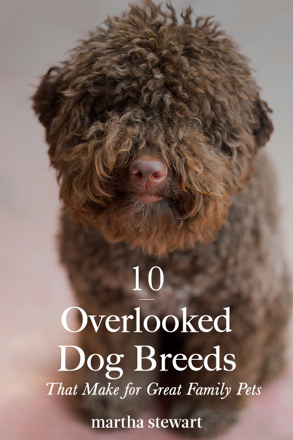 10 Overlooked Dog Breeds That Make For Great Family Pets Dog Breeds Mixed Breed Puppies Hypoallergenic Dog Breed