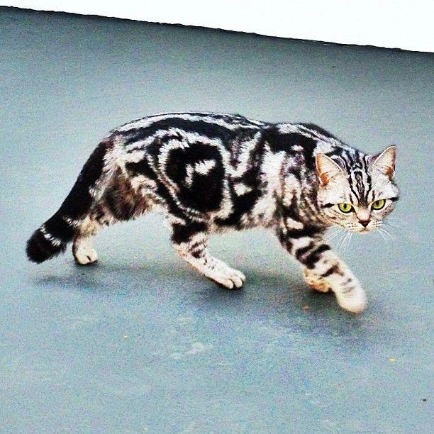 #salatino #clubesalatino #gato #cat #cats #pet #ilovemypet #animalplanet…