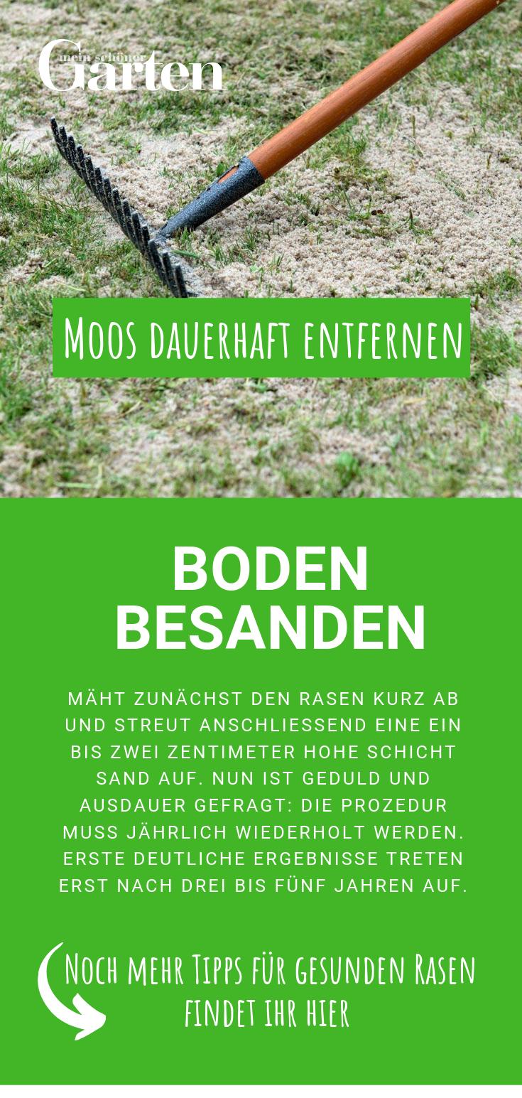 Moos Dauerhaft Entfernen So Wird Ihr Rasen Wieder Schon Rasen Unkraut Im Rasen Rasenpflege