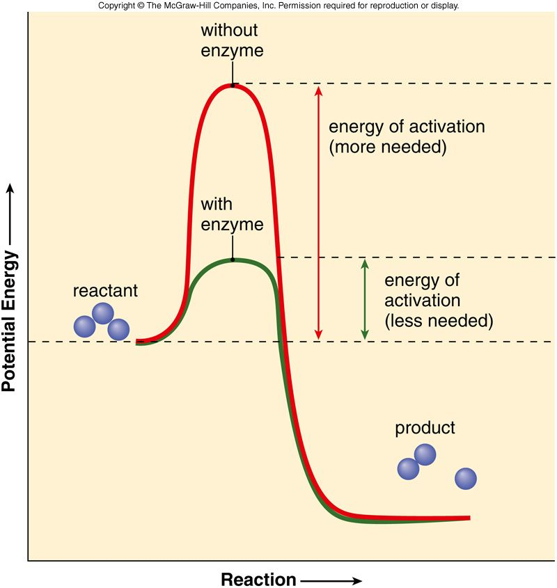 Graph Of Energy Of Activation With And Without Enzymes Enzymes Biology Biochemistry Biology Classroom