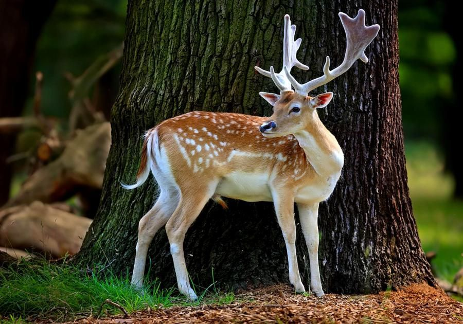 Nice Dear With Images Animals Beautiful Animal Wallpaper Nature Animals