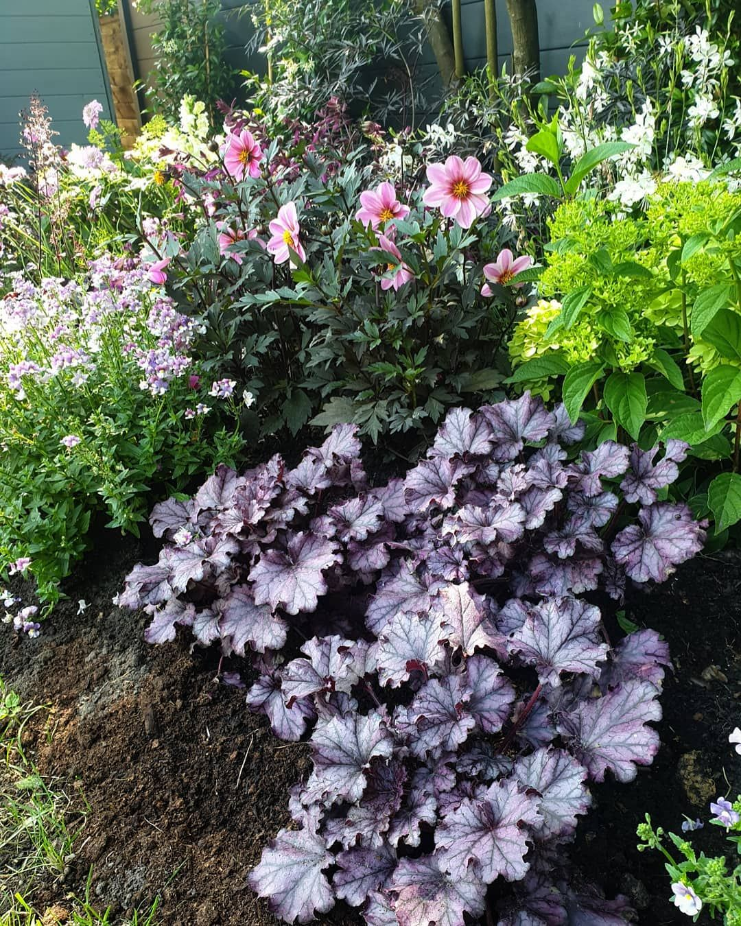 Love This Planting Scheme From Our Project In Chandlers Ford Heuchera Blackberry Jam Stealing The Show Amongst The Pinks And Pu Heuchera Plants Plant Design