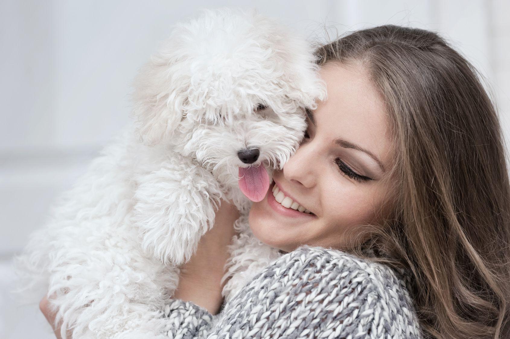 Tutkimus: Koirasi osaa tunnistaa tunteitasi