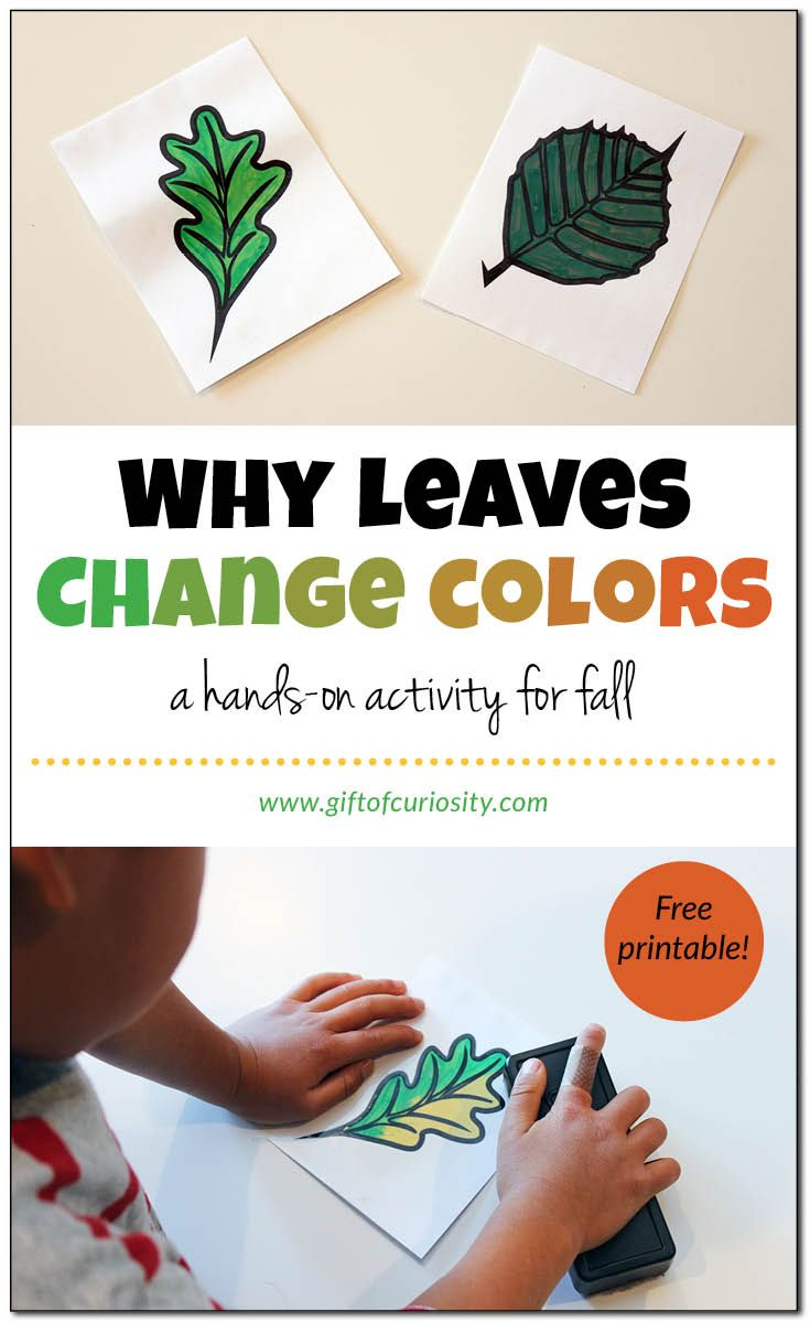 Hands On Activity Showing How Leaves Change Colors In The Fall Autumn Activities For Kids Fall Kindergarten Fall Preschool [ 1200 x 735 Pixel ]