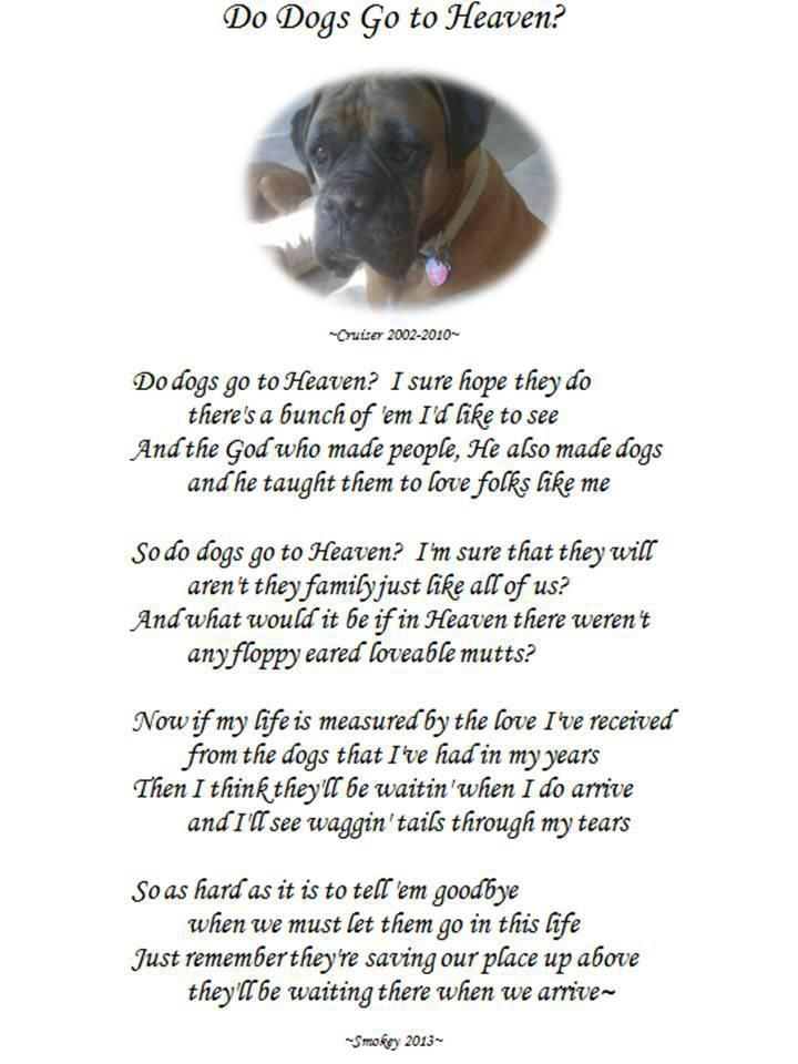 Do Dogs Go To Heaven I Love Dogs Losing A Pet Pet Bereavement