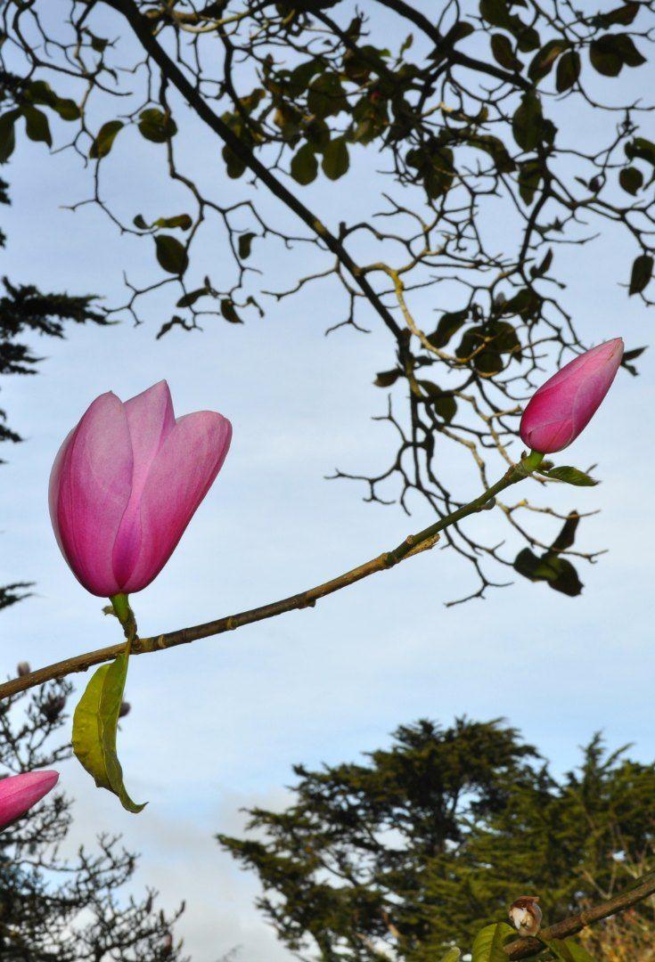San Francisco Botanical Gardens Tips To Visit San Francisco