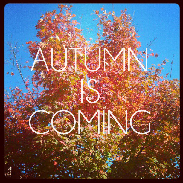 Image result for autumn soon