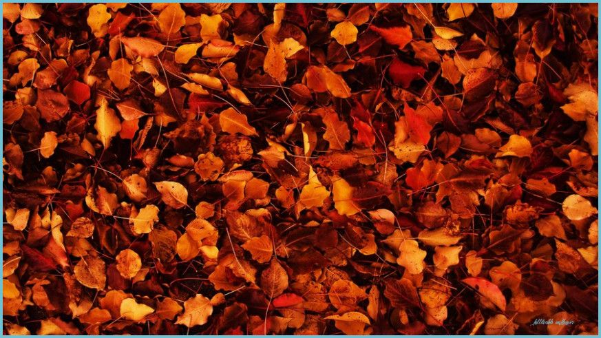 The Story Of Fall Tumblr Wallpaper Has Just Gone Viral Fall Tumblr Wallpaper In 2020 Thanksgiving Wallpaper Tumblr Wallpaper Autumn Aesthetic Tumblr