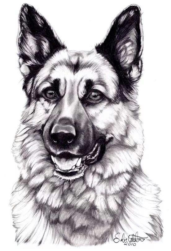 Pastor Aleman | Patio de mascotas | German shepherd dogs, Dogs y German