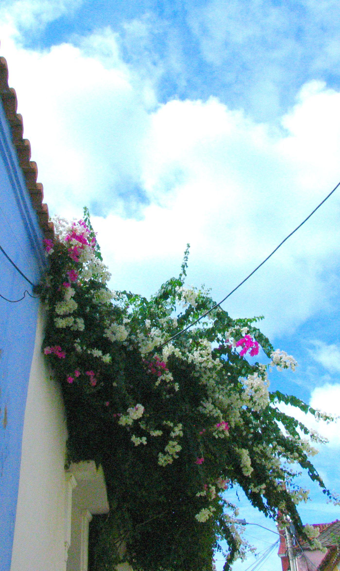 #caribbeanhouses #caribbean #colours