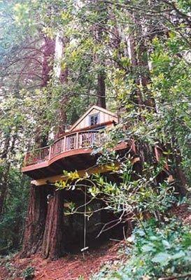 Amazing Tree Houses   tree houses are amazing!   treehouses, trees, birds