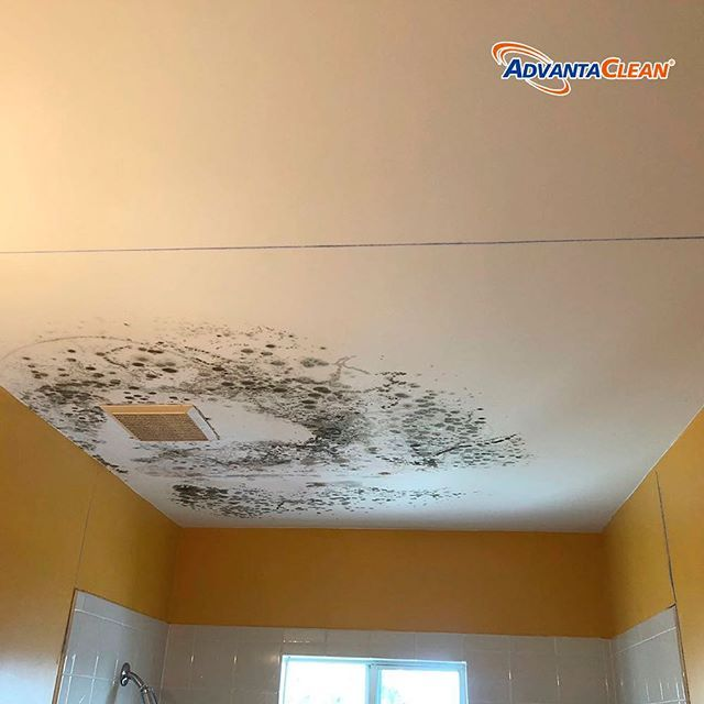 Why hire a mold specialist for removing mold mold removal is not a mold removal is not a do it yourself job mold removal requires professional chemicals equipment and pinteres solutioingenieria Images