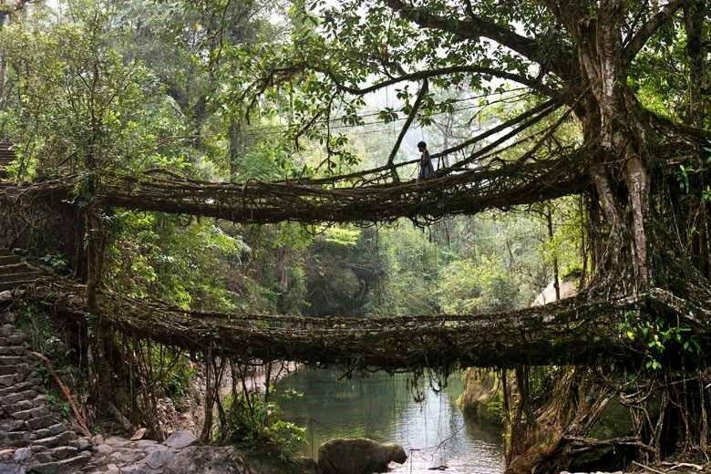 The Bizarre Living Root Bridges in India Marvelous Naturally Built Bridges